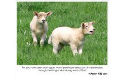 1 Peter 1:23 NIV - Born Again
