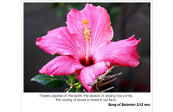 Song of Songs 2:12 - the season of singing has come